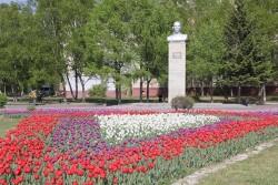 Тюльпаны первыми расцвели на клумбах в Артеме