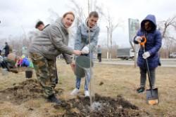 Пихты высадят в Артёме в рамках акции «Сад памяти»