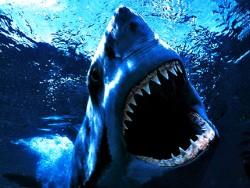 Названы места, где приморцы могут встретить акулу