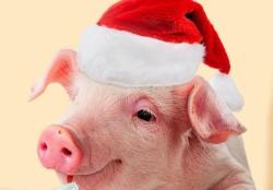Точный гороскоп на 2019 год свиньи для каждого знака Зодиака