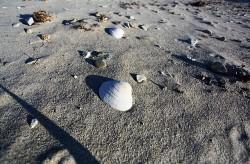 Шесть пляжей Приморья официально разрешены для купания