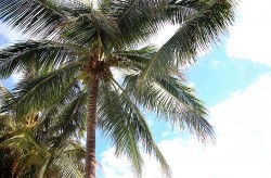 Тропические пляжи с экзотическими растениями появятся в Приморье