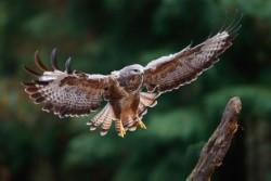 В Петербурге выпустят на волю краснокнижных птиц