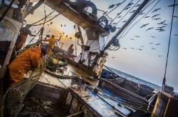 Более 375 тысяч тонн минтая выловили рыбаки Приморья
