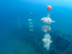 Эксперимент в Андаманском море