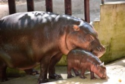Зоопарки Таиланда открыты для посетителей